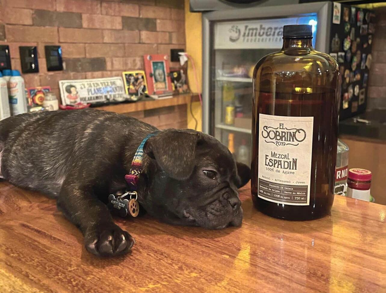 Santo Crudo on the Bar!